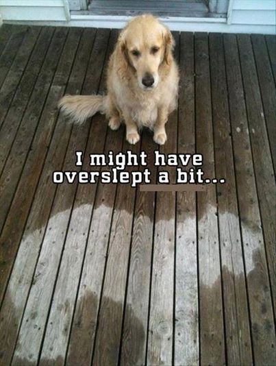 This Wet Dog May Have Overslept a Bit Too Long.