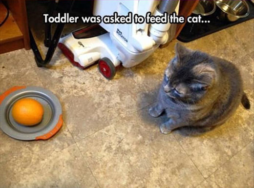 Toddler was asked to feed the cat.