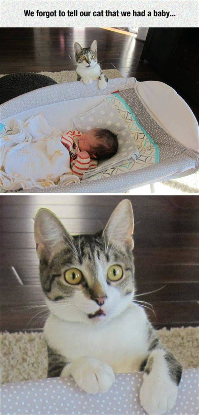 We forgot to tell our cat that we had a baby.