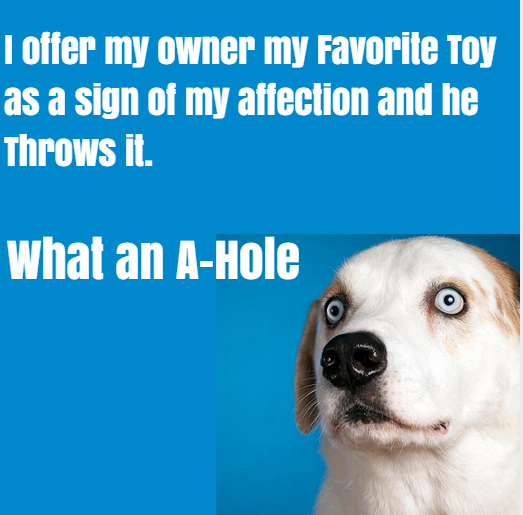 What your dog might actually be thinking when it brings you a toy and then you throw it.