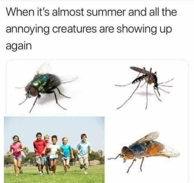 When it's almost summer and all the annoying creatures are showing up again.