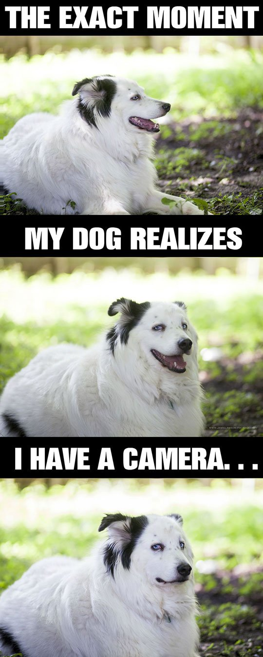 When This Dog Realizes There Is A Camera Pointed At Him He Does This