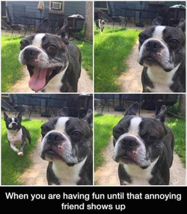 When you are having fun until that annoying friend shows up.