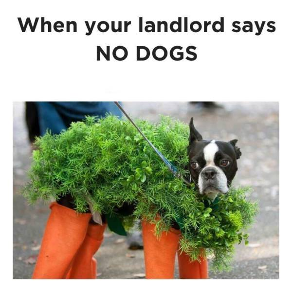 When your landlord says, no dogs.