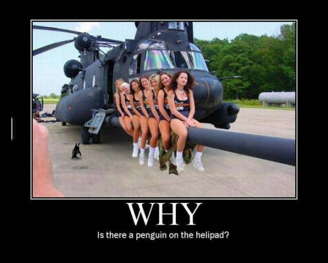 Why is there a penguin on the helipad?