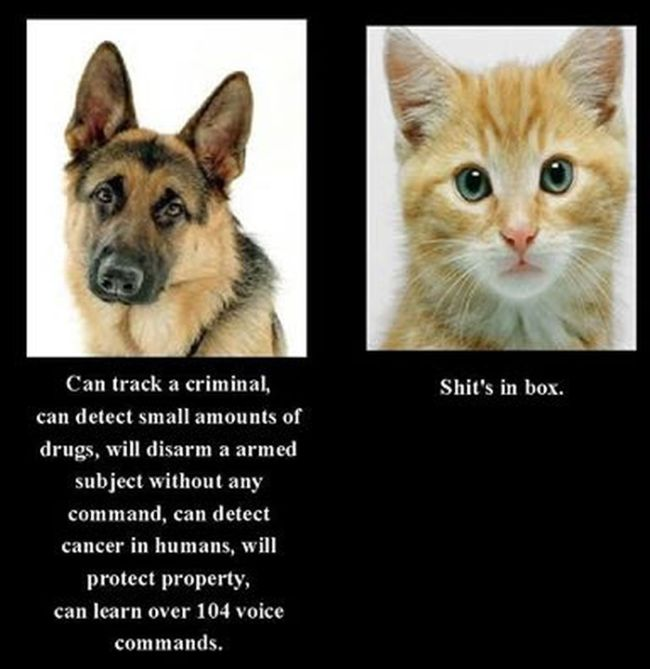 Why the police and military use German Shepherd dogs instead of cats.