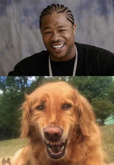 dog doing impression of xzibit s yo dawg meme face realfunny
